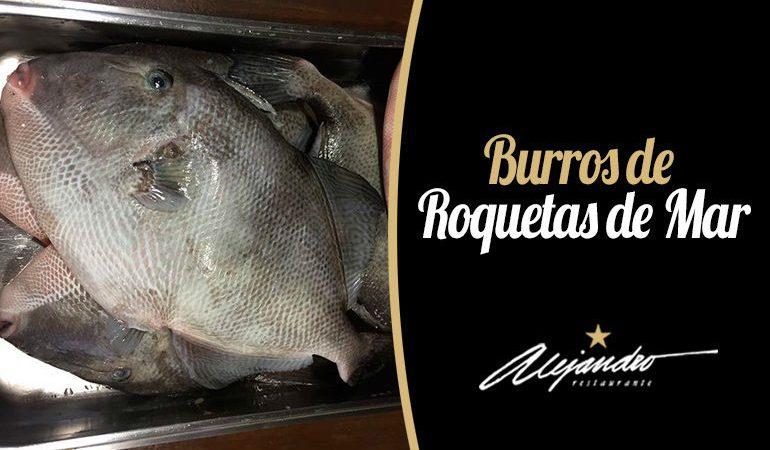 Restaurante Roquetas de Mar